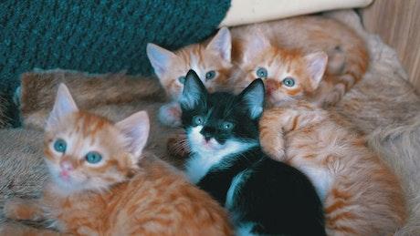 Little cats lying on an armchair