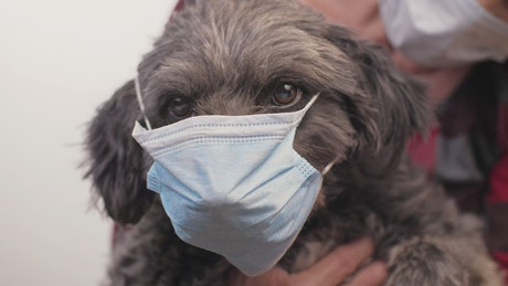 Little dog wearing a mask