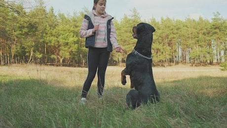 Little girl teaching tricks to her dog