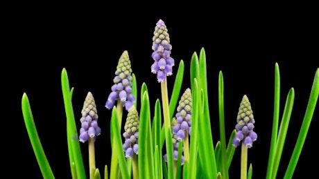 Little purple flowers growing