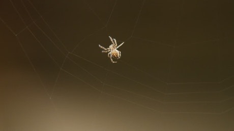 Little spider creating a web