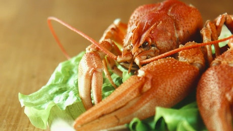 Lobster close up on a lettuce bed