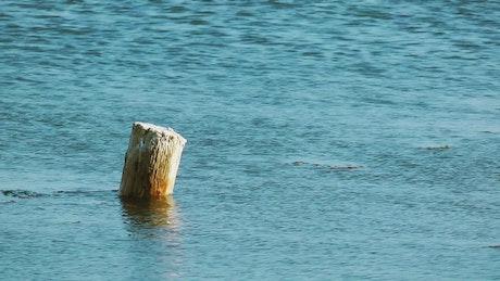 Log rising in the sea