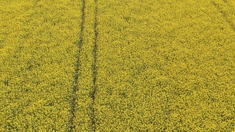 Looking down over crops