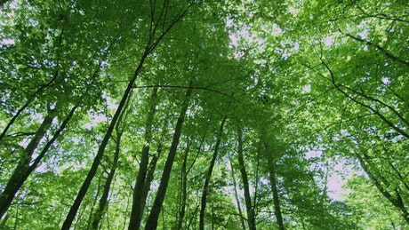 Looking up through the forest