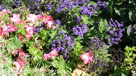 Lots of beautiful flowers