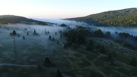 Low mist hanging over a forest
