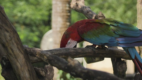 Macaw parrot feeding on a branch