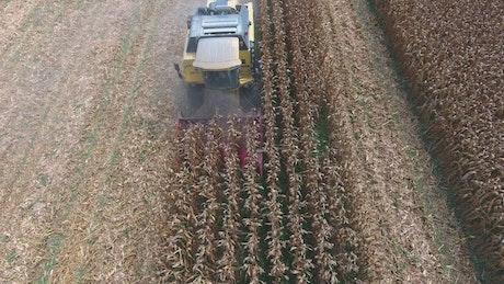 Machine working harvesting corn fields