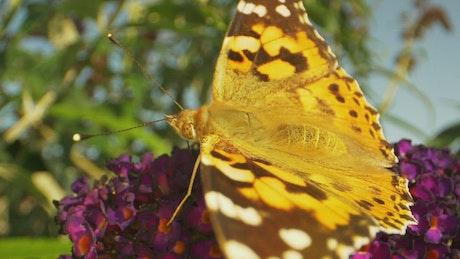 Macro shot of a summer Butterfly