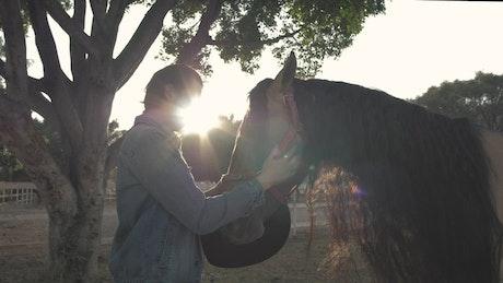 Man caressing horse