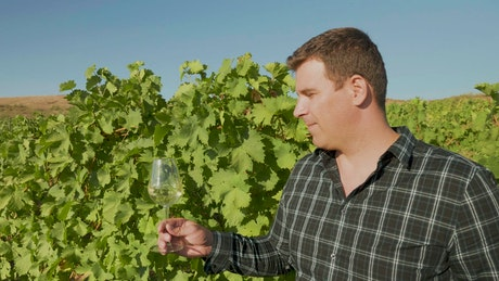 Man holding a glass of wine in a vineyard