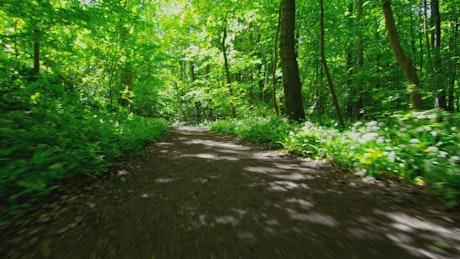 Man jogging through woodland, tracking shot