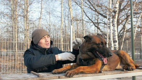 Man petting a big dog in the park