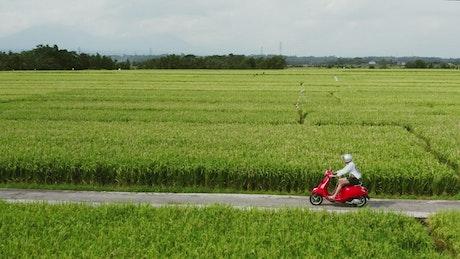 Man rides red scooter through green farm fields