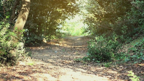 Man running along a path in a sunny forest