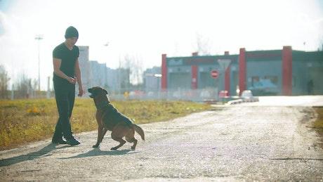 Man teaching tricks to his dog