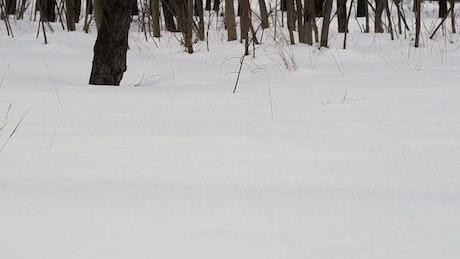 Man walking in deep snow