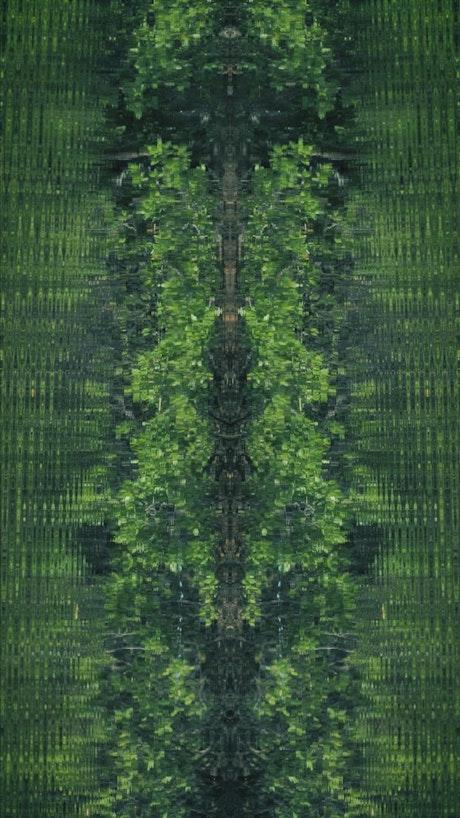 Mangrove swamp, abstract shot