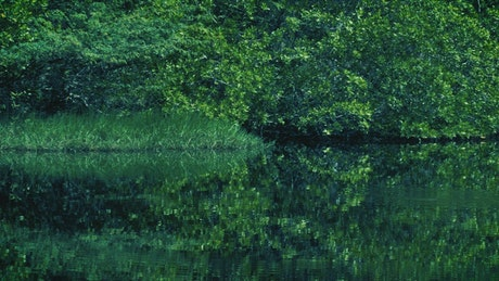Mangrove swamp with green nature