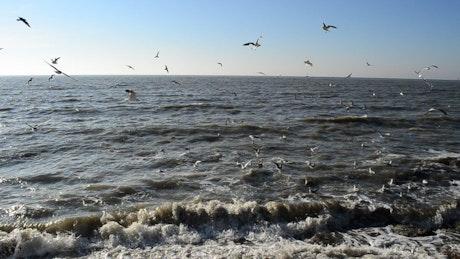 Many seagulls flying on the seashore