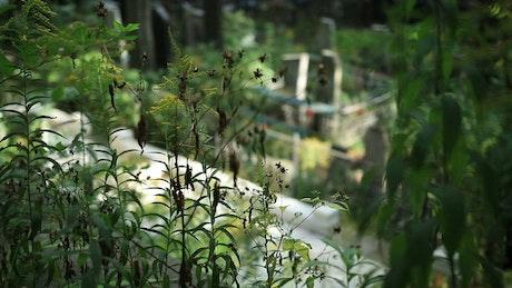 Marble crosses at a churchyard