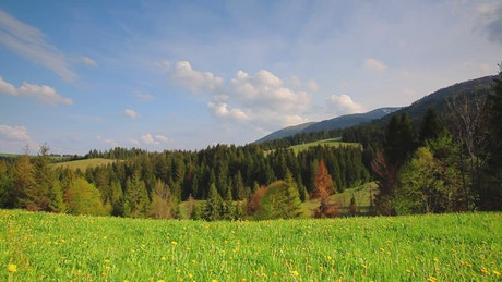 Meadow near a forest during the spring ground view