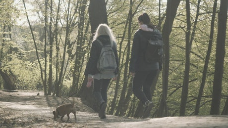Millennial girlfriends walk little dog on forest path