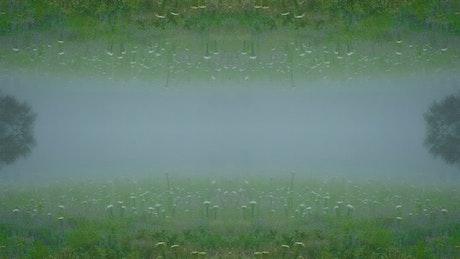Mirror foggy forest