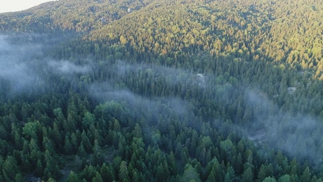 Mist hanging over a forest