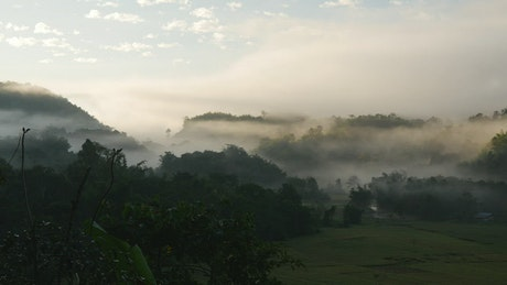 Misty hills and rice fields