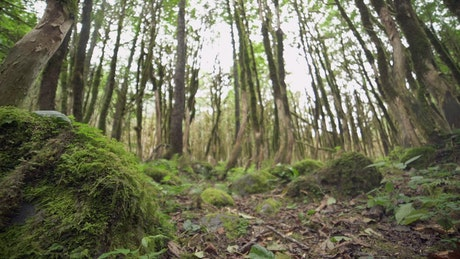 Mossy forest ground view