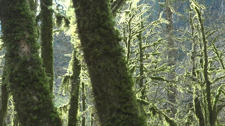 Mossy trees in a mystic forest