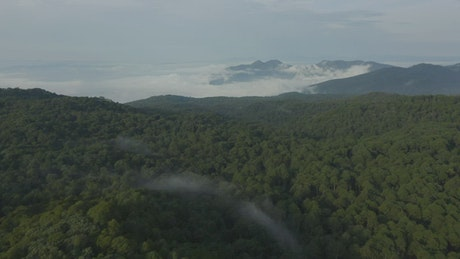 Mountain range covered by trees seen from above