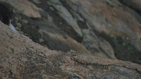 Mountaineer climbing a rocky hill