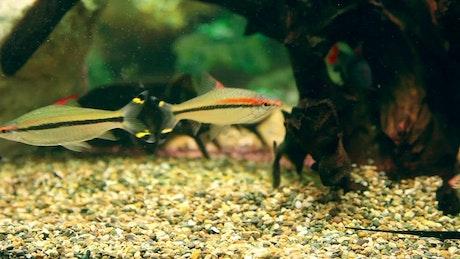Multi-colored fish swimming in the aquarium