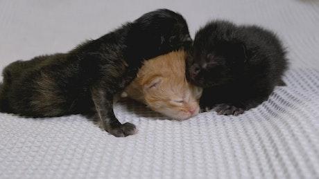 Multicolor newborn baby cats