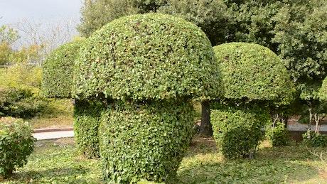 Mushroom shaped bushes at a park