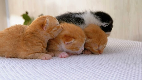 Newborn fluffy kittens