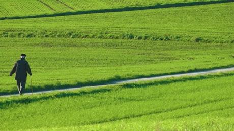 Old man walking through green fields