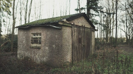 Old shed in the forest