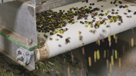 Olive conveyor machine, close up view