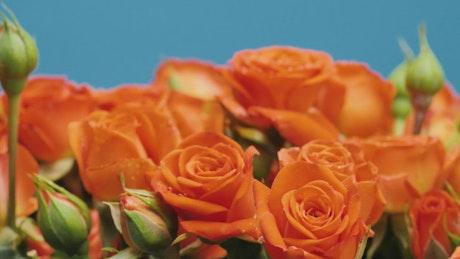 Orange bunch of flowers