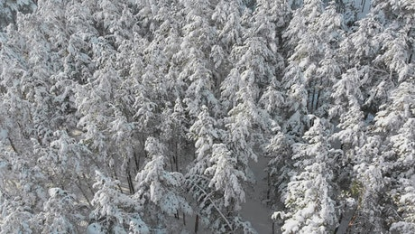 Over the treetops of a snowy forest