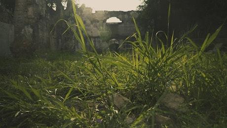 Overgrown garden and ruins