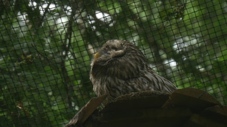 Owl inside a cage in nature