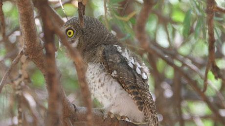Owl standing in a tree