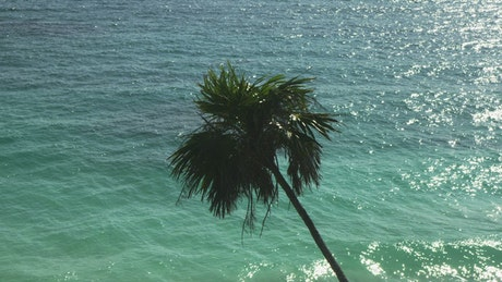 Palm leaning over the ocean