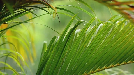 Palm leaves under a gentle rain