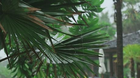 Palm plant under the rain
